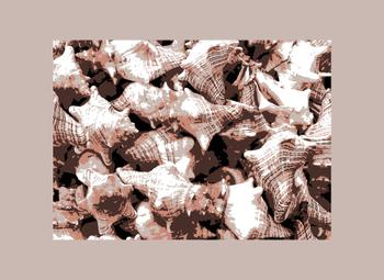Conch Shell Composition