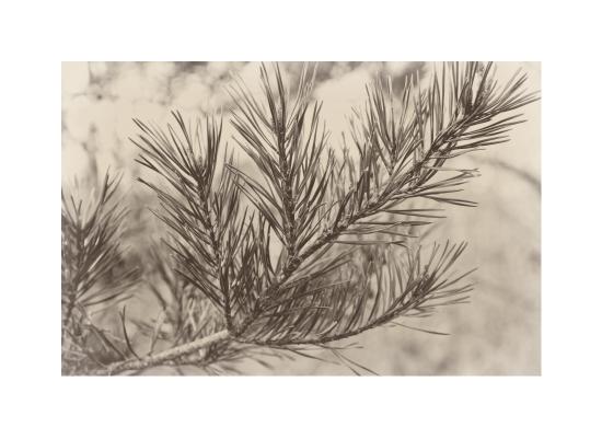 art prints - Branching out by That Girl Press