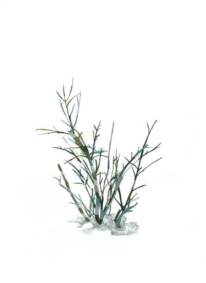art prints - Winter Tree by Christa Dalien