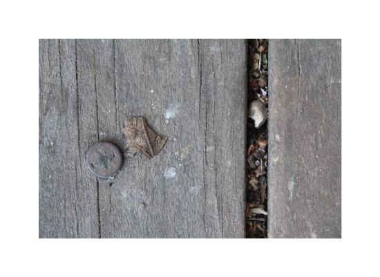 art prints - Big Wood Small Leaf by Pelin Hepcilingirler