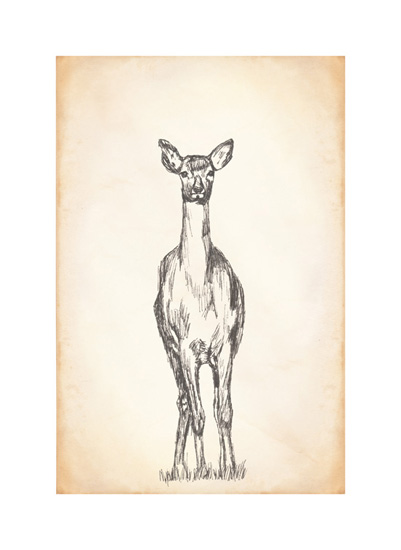 art prints - Field Sketch by Keen Peachy