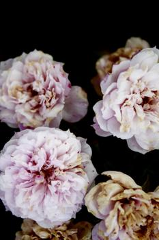 Floral Symphany