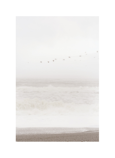 art prints - Flight of the Ocean by Sharon Rowan
