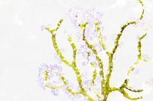 Crazy Coral by Jennifer Rice