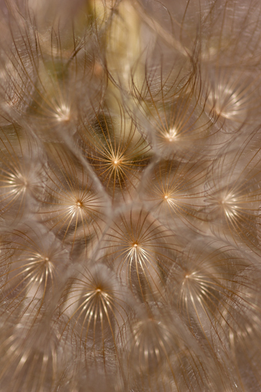 art prints - Puff of Air by Michelle A Lundquist