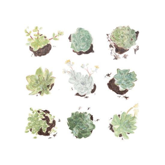 art prints - Succulents Study by Kate Wong