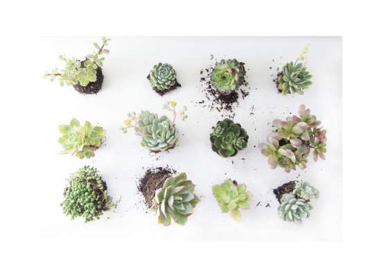 art prints - Succulents Observation by Kate Wong