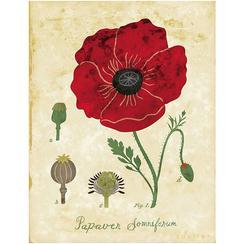 Red Poppy Botanical