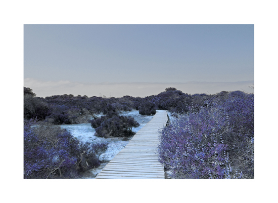 art prints - Imagination path by Amy Conover