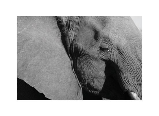 art prints - Mighty & Majestic by Kampai Designs