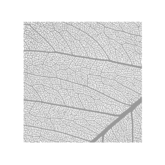 art prints - Leaf by Stellax Creative