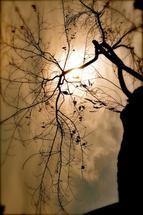 Branches Of Man by Ryan Iskander