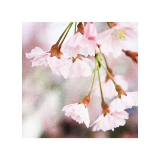 art prints - Spring Has Sprung by Loree Mayer