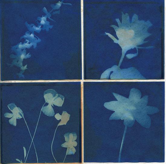 art prints - Sun Transfer: 4 flowers by Tracey Cataldo