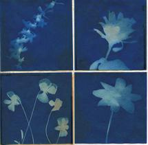 Sun Transfer: 4 flowers by Tracey Cataldo