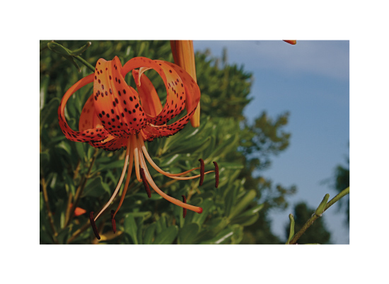 art prints - Freckled Flower by AJD