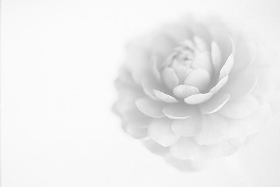 art prints - flower by Elaine Melko