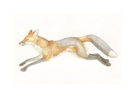 art prints - Swift Fox by Natalie Groves
