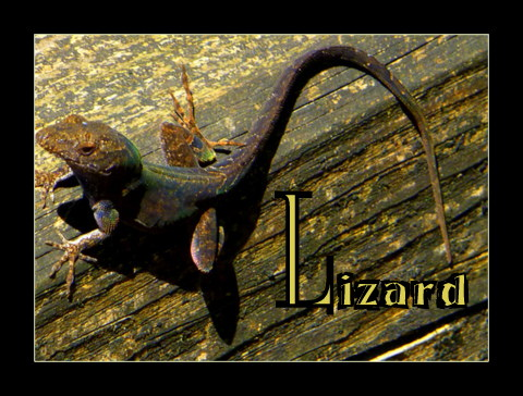 art prints - L is for Liaazrd by Nancy Martin