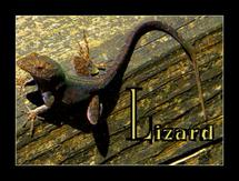 L is for Liaazrd by Nancy Martin
