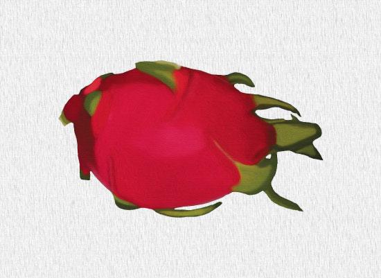 art prints - Dragon Fruit by Cindy Jost