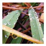 Autumn Dew by Alicia Huber