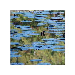 Blue Illusion: la natura riversa