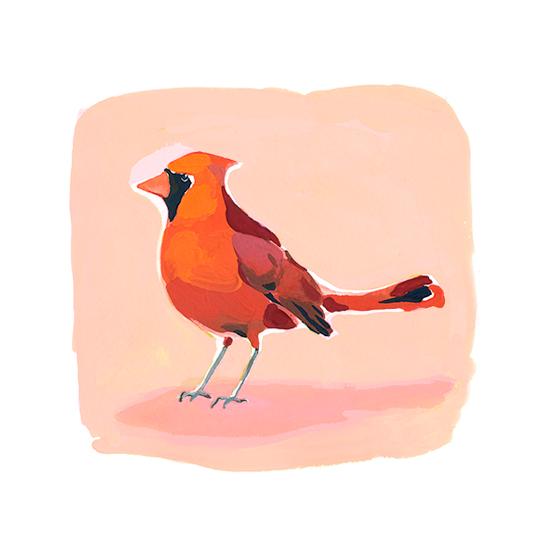 art prints - cardinal by Betty Hatchett