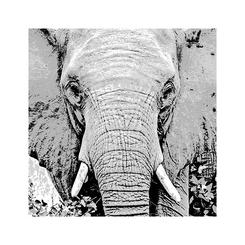 african animal series the ELEPHANT