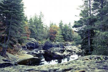 River Focus