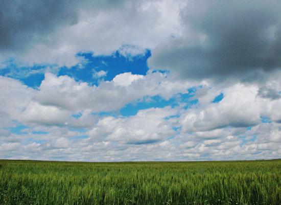 art prints - Fields of Grain by Steph Lambert