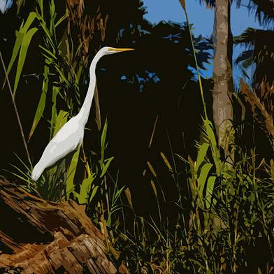 art prints - Posing Egret by Diane