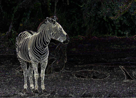 art prints - Zebra with outlined stripes by Diane