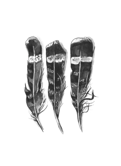art prints - Hawk Feathers by Amanda Paulson
