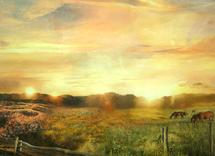 The Sun Also Rises by Stefanie Bales