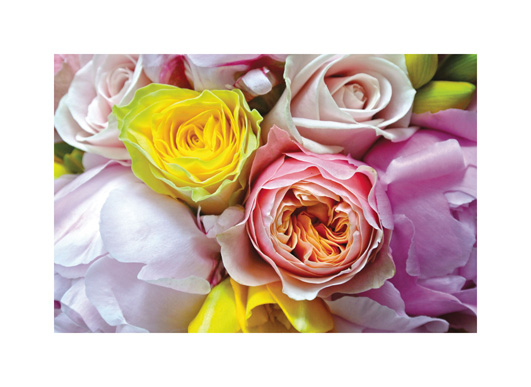 art prints - Up Close and Roses by Jade Tran