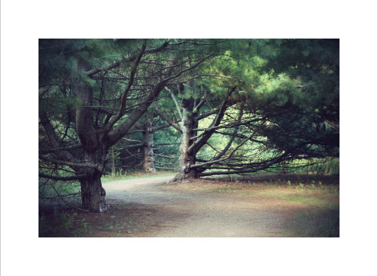 art prints - Haunted Wood by Gray Star Design