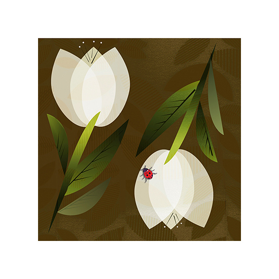 art prints - White Tulips by Carol Hatcher