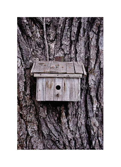 art prints - Bird House by Lesive Designs