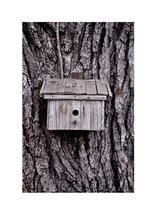 Bird House by Lesive Designs