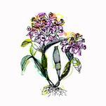 Fantasy Botanicals by Maria Montiel