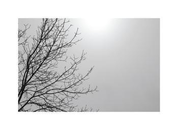 Snow Study: Sun