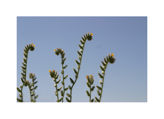 art prints - Mojave Wildflowers 2 by An-Lon Chen