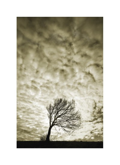 art prints - Sunny Tree by Uros Zagozen