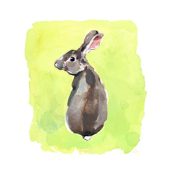 art prints - Wild Rabbit by Betty Hatchett