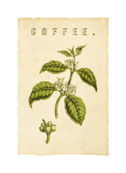 Botanical Series Coffee