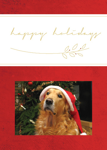 holiday photo cards - Modern Happy Holiday Card by Alexandra Cook