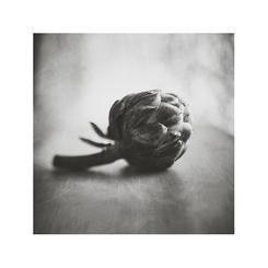 Artichoke in Black and White