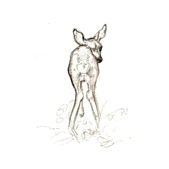 art prints - But, Deer by Charis