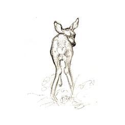But, Deer